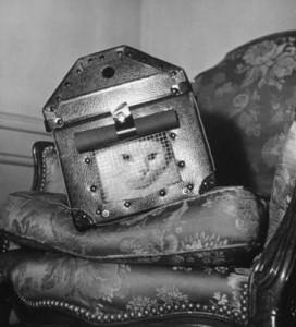 cat-bomb-shelter-272x300